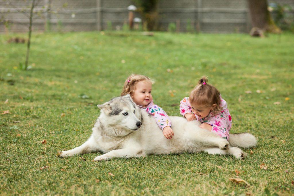 Descubra se recém-nascidos podem conviver com animais de estimação